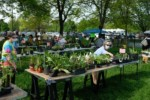 May 22nd: Annual Native Plant Sale