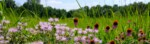 """July 24th: Tour of Guy Denny's Prairie - """"18 Years of Natural Ecological Beauty"""""""